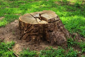 Image of a tree stump.